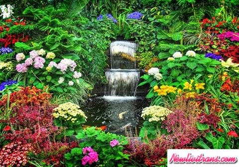 Vườn hoa Hàm Rồng bốn mùa nở hoa ở Sapa