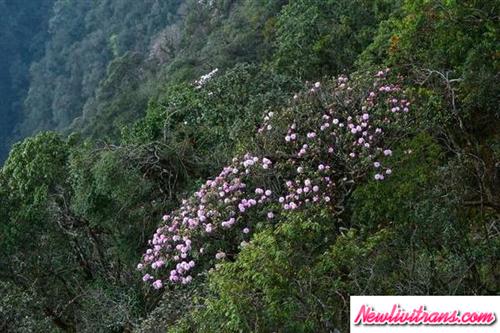 Khai truong tàu leo núi Mường Hoa -Fansipan