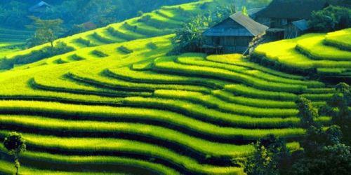 Hà Nội - Lào Cai (SP1)